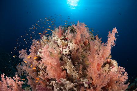 récif corallien mer rouge © Guillen