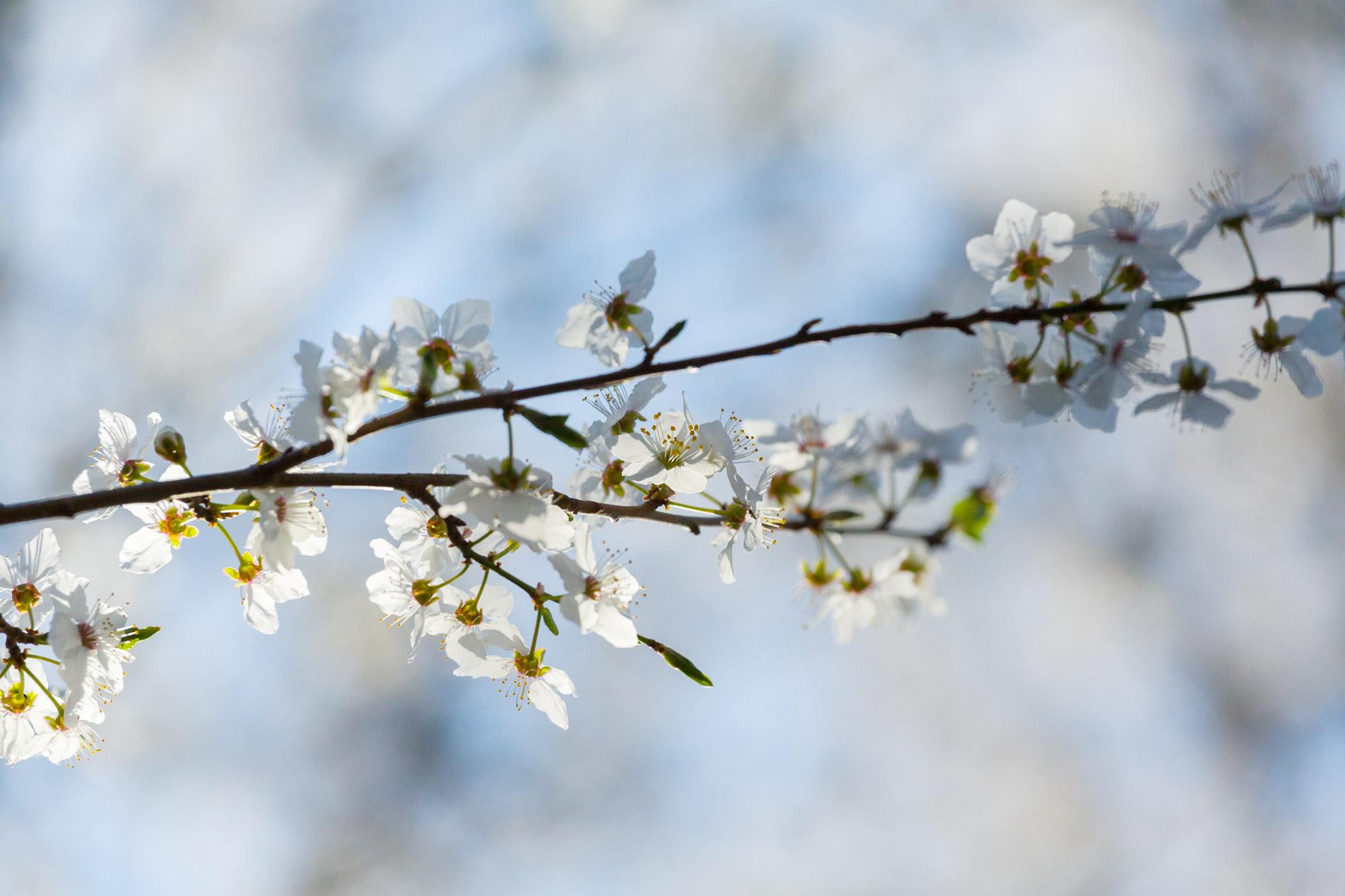 Rencontre sous le cerisier 2015